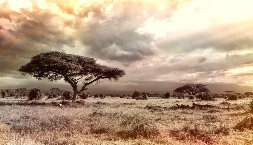 africaheader.jpg